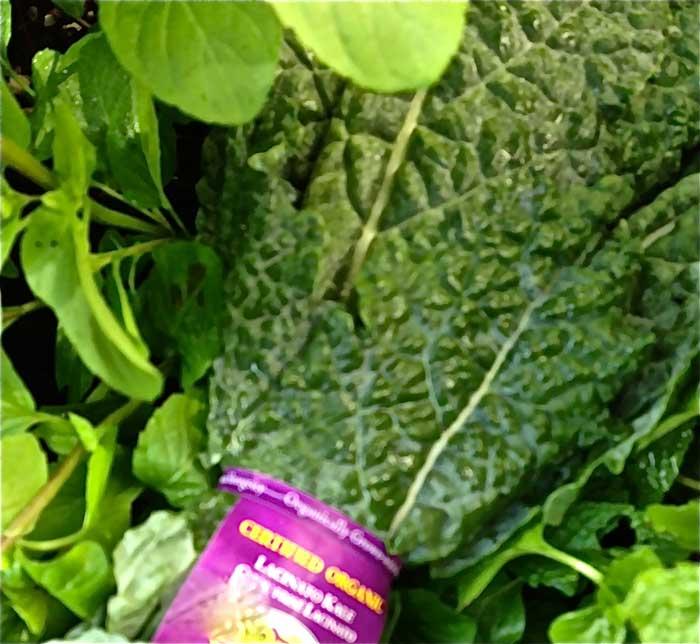 Gluten-Free Tuscan Kale Salad Recipe