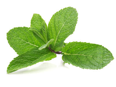 Benefits of Peppermint Peppermint can be used as an herbal remedy to relieve gas and nausea due to indigestion. I like it in my Vodka too!
