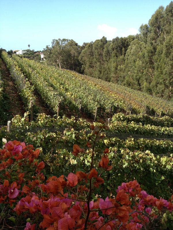 Harvesting and Loving Life in Malibu